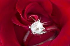 Rose rosse e fedi nuziali Fotografie Stock