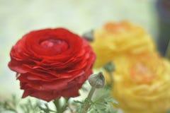 Rose rosse e gialle Immagini Stock Libere da Diritti