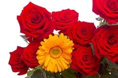 Rose rosse e primo piano giallo del gerber Fotografia Stock