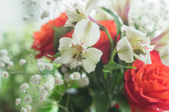 Rose rosse ed Alstroemeria bianco Fotografia Stock Libera da Diritti