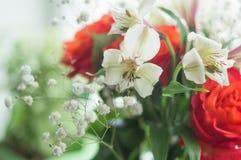 Rose rosse ed Alstroemeria bianco Fotografia Stock