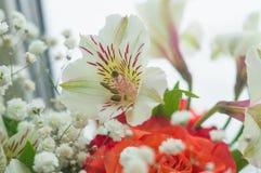 Rose rosse ed Alstroemeria bianco Immagini Stock