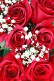 Rose rosse. Giorno dei biglietti di S. Valentino Fotografia Stock Libera da Diritti