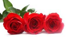 Rose rosse isolate Fotografia Stock