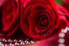 Rose rosse Mazzo delle rose rosse Giorno di biglietti di S. Valentino, BAC di giorno delle nozze Fotografia Stock