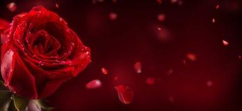 Rose rosse Mazzo delle rose rosse Giorno di biglietti di S. Valentino, BAC di giorno delle nozze Fotografia Stock Libera da Diritti