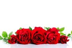 Rose rosse nella fila sopra bianco Fotografie Stock Libere da Diritti