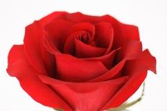 Rose rosse per il biglietto di S. Valentino Fotografia Stock Libera da Diritti