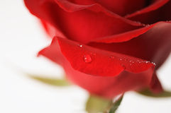 Rose rosse per il biglietto di S. Valentino Immagine Stock Libera da Diritti
