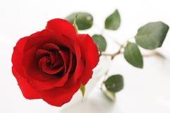 Rose rosse per il biglietto di S. Valentino Fotografia Stock