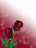 Rose rosse romantiche con il fondo del bokeh del abstarct Fotografia Stock Libera da Diritti