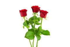 3 rose rosse su un fondo bianco Immagine Stock Libera da Diritti