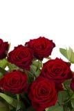 Rose rosse su una priorità bassa bianca Immagine Stock