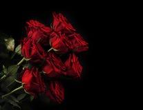Rose rosse sul nero Fotografia Stock