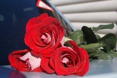 Rose rosse sul tronco di automobile per fondo, fuoco selettivo Fotografie Stock