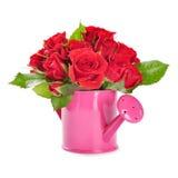 Rose rosse in un annaffiatoio rosa Fotografia Stock Libera da Diritti