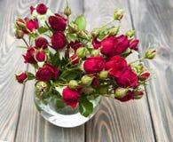 Rose rosse in vaso Fotografia Stock