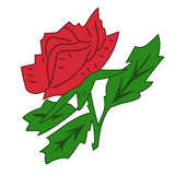 Rose rouge. Image stock