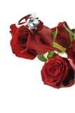 Rose rouge avec la bague de fiançailles Photographie stock libre de droits