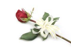 Rose rouge avec le ruban blanc d'isolement sur le fond blanc Image stock
