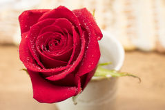 Rose rouge le jour pour de Valentine ` s ou de ` s de mère Image libre de droits