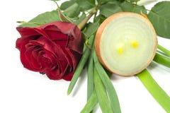 Rose rouge simple à l'oignon frais coupé en tranches images stock
