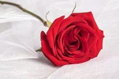 Rose rouge simple sur le fond blanc de tissu de Tulle image libre de droits