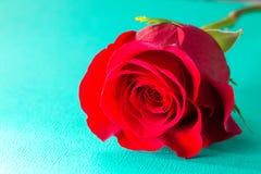 Rose rouge simple sur un Tableau bleu images stock