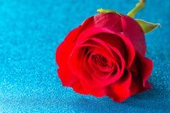 Rose rouge simple sur un Tableau bleu photos stock