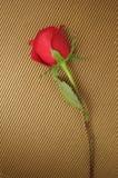 Rose rouge sur des pistes Photo stock