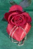 Rose rouge sur le vert Photographie stock libre de droits