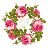 Rose round banner Royalty Free Stock Images