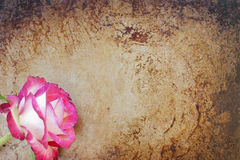 Rose and rust. Beautiful rose on a rusty, grunge background royalty free stock images