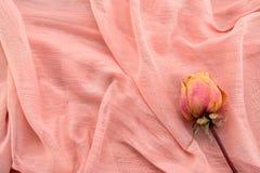 Rose sèche Photographie stock libre de droits