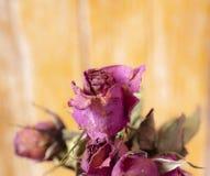 Rose sèche de fleur sèche photo libre de droits