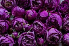 Rose sèche de pourpre sur le fond en bois Macro Images stock