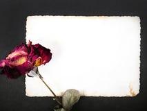 Rose sèche de rouge et photographie vide Photo libre de droits
