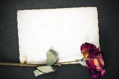 Rose sèche de rouge et photographie vide Photos libres de droits