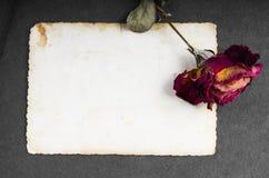 Rose sèche de rouge et photographie vide Photographie stock