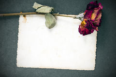 Rose sèche de rouge et photographie vide Image libre de droits