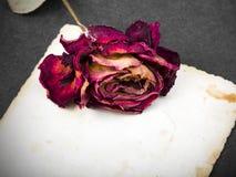 Rose sèche de rouge et photographie vide Images stock