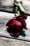 Rose sèche sur le bois Photographie stock