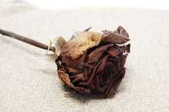 Rose on the sand Royalty Free Stock Images