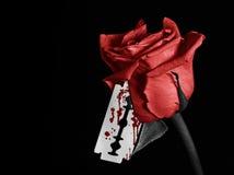 Rose sanglante Photos libres de droits