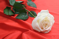 Rose on satin Royalty Free Stock Photography