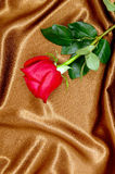 Rose on satin fabric Royalty Free Stock Image