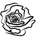 Rose se ennegrece, vector, ejemplo, silueta, fondo blanco, esplendor, estilo, pasión libre illustration