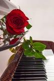 Rose se trouve sur des clés de piano Photo libre de droits