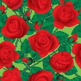 Rose seamless Royalty Free Stock Photo