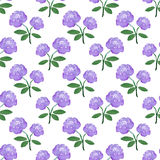 Rose. Seamless pattern with flowers. Hand-drawn background. Vector illustration. Stock Image